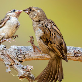 by Mukesh Chand Garg - Animals Birds