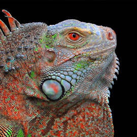 cameleon by Yunus Lee - Animals Reptiles