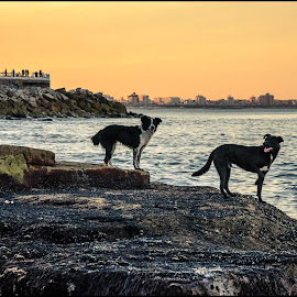 Sunset with my friends by Sergio Moya - Animals - Dogs Portraits ( argentina, dogs, sunset, sea, sunrise, beach, landscape, rocks,  )