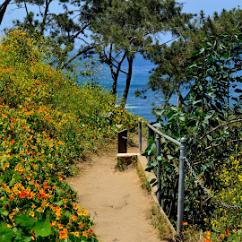 on top of La Jolla Cove by David Allison - Landscapes Beaches ( path, nature, landscape )