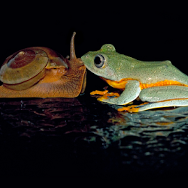 Love is Blind by Kurito Afsheen - Animals Amphibians ( canon, animals, macro, frog, indonesia, frogs, snail, animal )