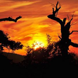 by Alegna Nehc - Landscapes Sunsets & Sunrises