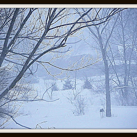 snowy meadow by Constance S. Jackson - Landscapes Prairies, Meadows & Fields ( field, pasture, winter, cold, snow, meadow )