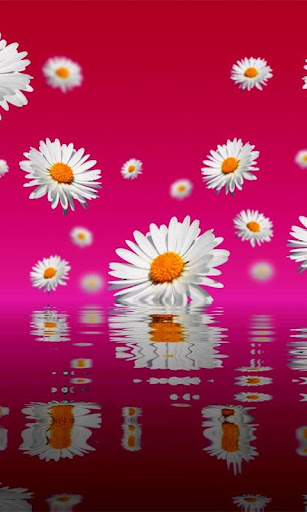 Floating Flowers Wallpaper