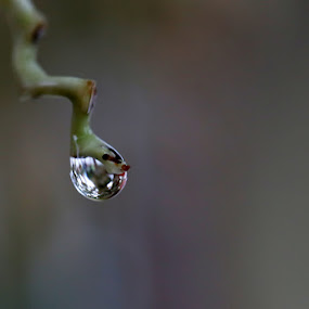 Morning drop by Taufik Taspa - Nature Up Close Natural Waterdrops