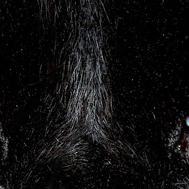 Bucca by Guy Harnett - Animals - Cats Portraits ( cat, cats eyes, vision, gaze, stare, deep, hypnotic, eyes )
