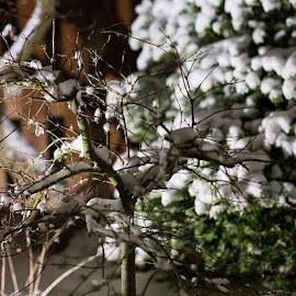 Pretty snow by Bianca Smith - Instagram & Mobile Other ( nature, tree, snow, plants, night )