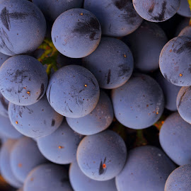 by Sanjib Paul - Food & Drink Fruits & Vegetables ( blue, grapes, fruits, sonoma, wine grapes )