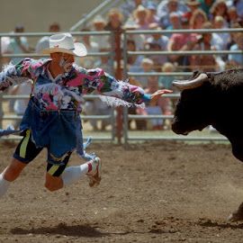Rodeo Clown Dare by Jim Downey - Sports & Fitness Rodeo/Bull Riding ( danger, daring, rodeo, clowning, bull tease )