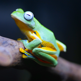 by Wie Andy - Animals Amphibians