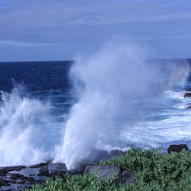 by Janet Marsh - Landscapes Beaches ( galapagos, blowhole,  )