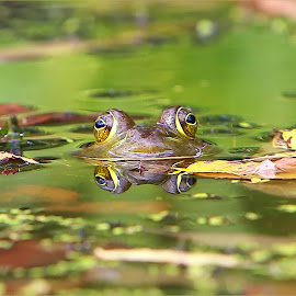 A Frog Fall Day by Dennis Ba - Animals Amphibians ( frog, amphibian, pond )