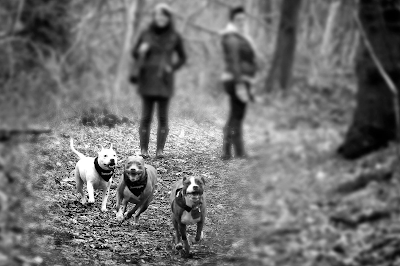 Best dog-walkers in Maidstone | Teston | Barming | park wood | Ditton | hollingbourne