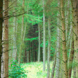 Corridor by Dave Cooper - Landscapes Forests ( forest )