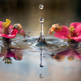 Two curious snail by Alberto Ghizzi Panizza - Nature Up Close Other Natural Objects ( reflection, drop, funny, couple, snail, flower )
