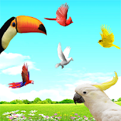 App Sky Birds Live Wallpaper Free version 2015 APK