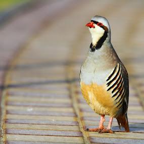 by Syam Alendu Nair - Animals Birds