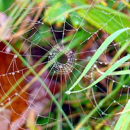 good morning spider by Dori Ta - Nature Up Close Webs