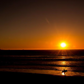 The Lonely Surfer by August Naude - Sports & Fitness Surfing (  )