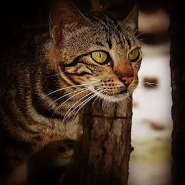 by Ayahnya Cakrabuwana - Animals - Cats Portraits