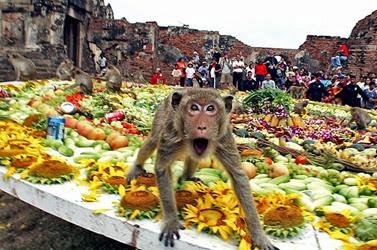 monkey-buffet-festival