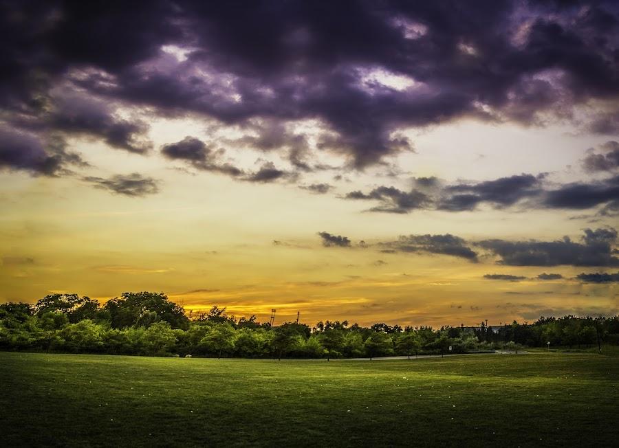 Serene Sunset Over the Green by Benson Paul - Landscapes Sunsets & Sunrises ( orange, park, sunset, greenery, lonely, sun )
