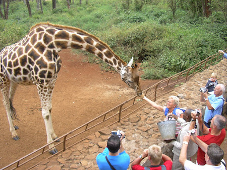 12. Giraffe center Nairobi.JPG