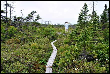6 - Boot Cove - The Bog