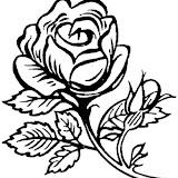 rosa-grande-bella-dibujos-para-colorear-1.jpg