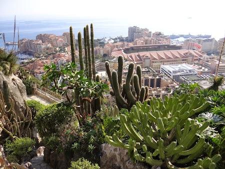 09. Gradina exotica - Monaco.JPG