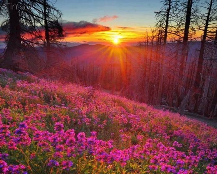 Thời tiết lại bừng sáng như rừng hoa dưới ánh nắng bình