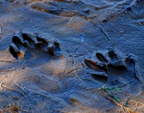 21. footprints-kab