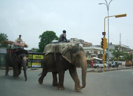 Imagini Jaipur: doi elefanti se leganau pe o strada Indiana