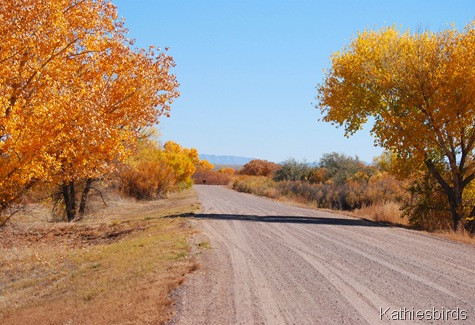 19. autumn road-kab