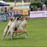 Hunde auf der Trabrennbahn