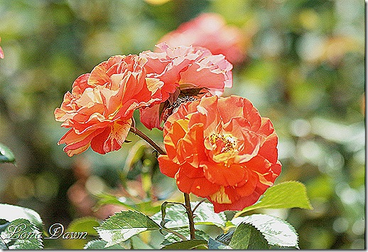 A Hocking Hill S Garden The Rose Garden At The Lewis