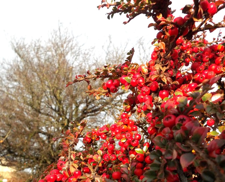 red berries and a wintery tree