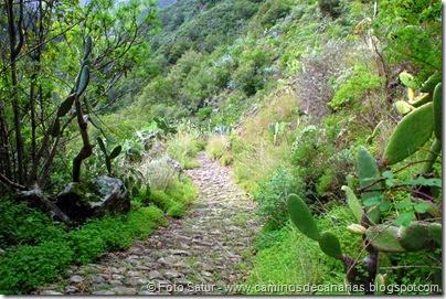 7357 La Laguna-Barranco Laurel(Vueltas Acero)