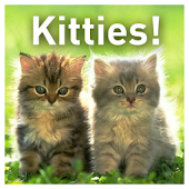 Kitties!