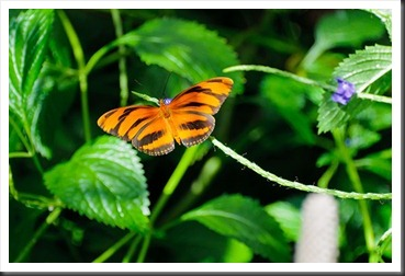 2011Aug3_Butterfly_House-14