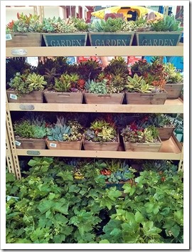 130612_SucculentGarden_Costco_14