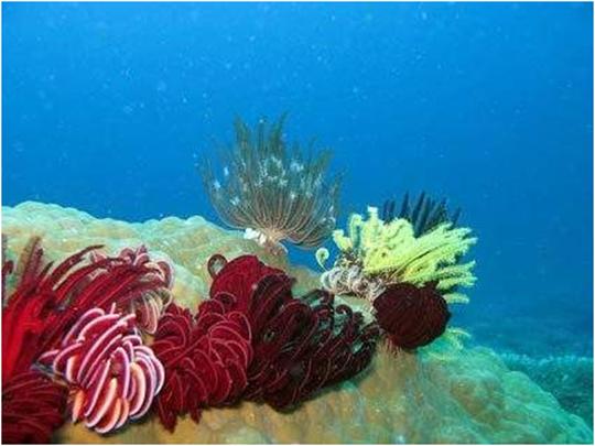 Pulau Kakaban Tempat Wisata Pulau Kalimantan
