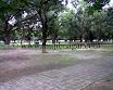 Mujibnagar-Mango-Grove_3.jpg