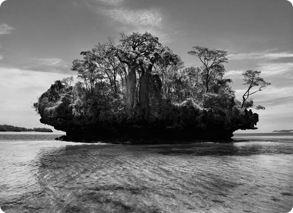 salgado-genesis-baobab-trees