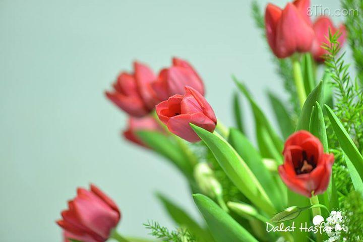 Hoa tulip ở các shop rất đẹp, các bạn ghé shop nhé!