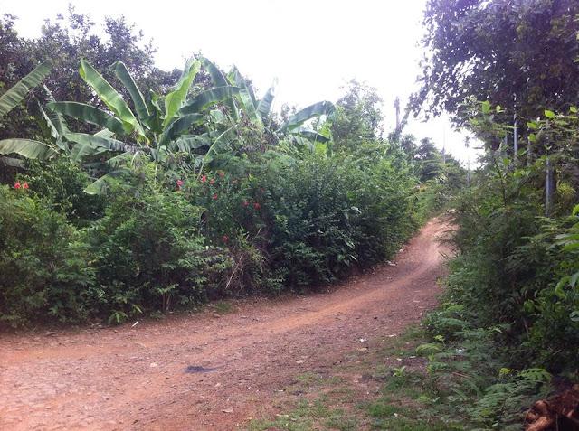 Bán đất rẫy Phú Bình Long Khánh Đồng Nai 01