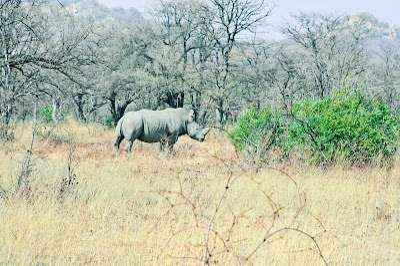 SouthernAfrica257.jpg