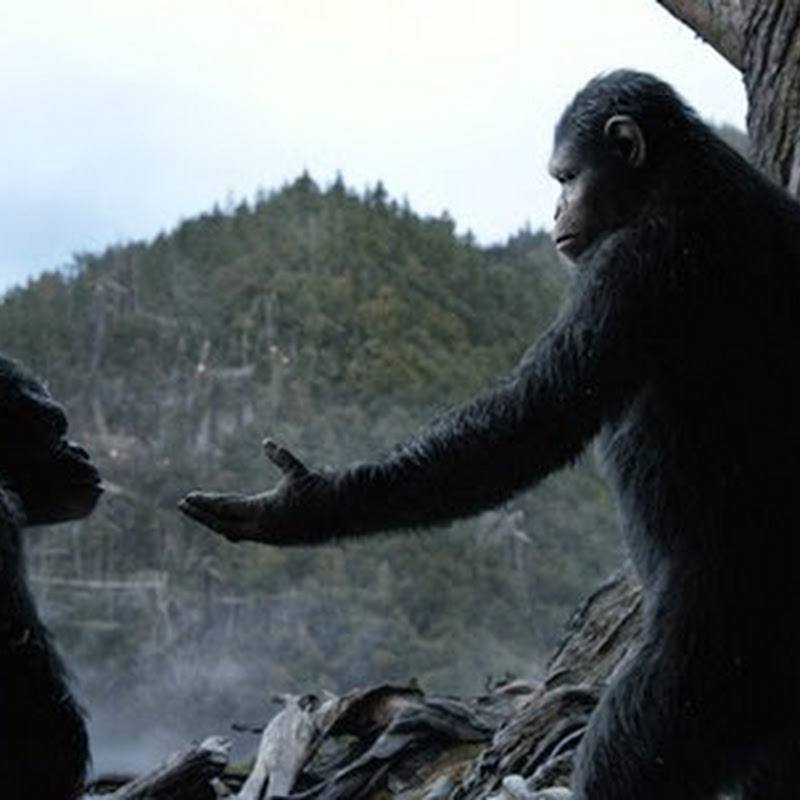 """Dawn of the Planet of the Apes"" International Trailer Reveal"