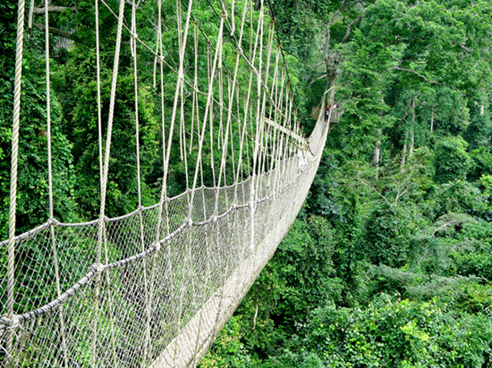 Alizul: 8 THRILLING SUSPENSION WALKWAYS