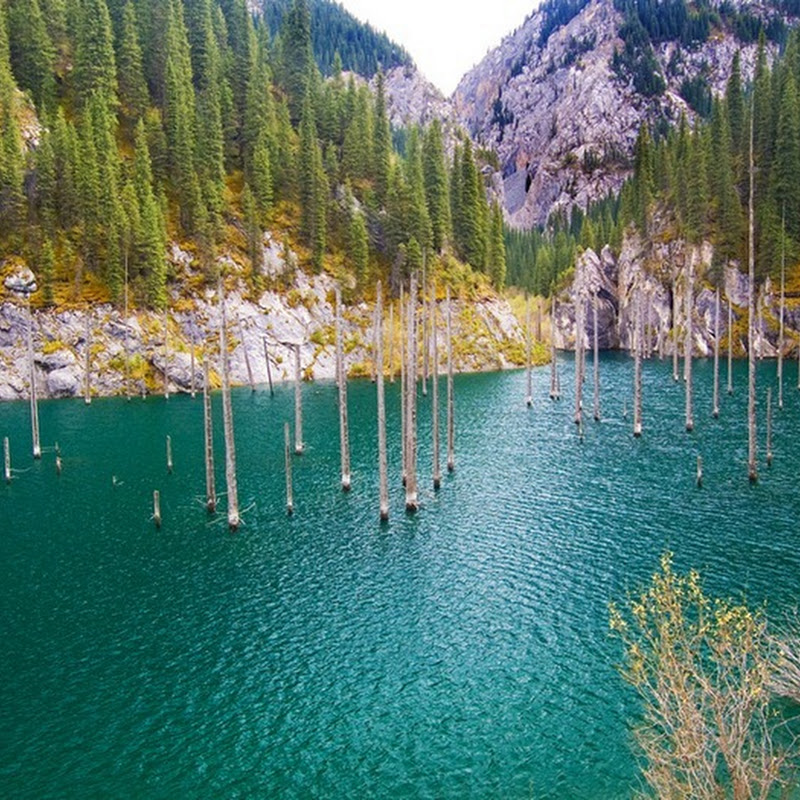 The Sunken Forest of Lake Kaindy